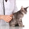 Ветеринарные клиники в Борском